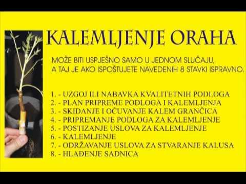 Kalemljenje oraha u Bosni