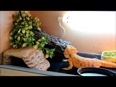 DIY   bearded dragon vivarium