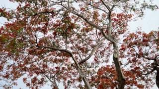 Destino: Pantanal do Mato Grosso do Sul