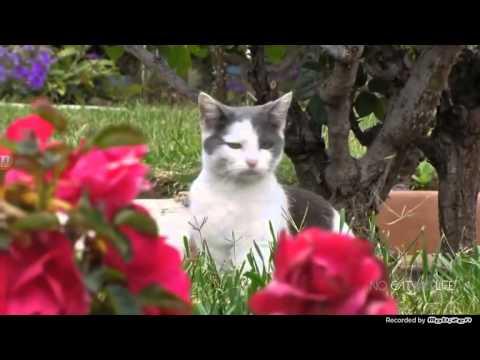 Прикол про котов очень смешно до смерти