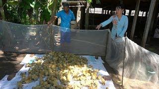 Chú Hung Vu ủng hộ gia đình anh Chương 300 con vịt đẻ trứng