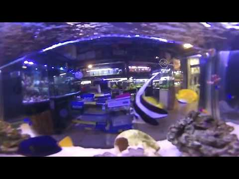 [360today] 언더더씨~ 형형색색 아름다운 해수어! (Under the Sea - A colorful and beautiful saltwater fish!)