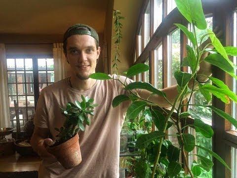 Exotische Pflanzen Im Haus Update