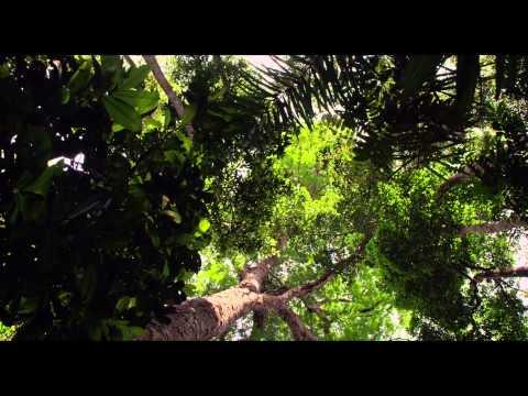 Amazonia - Bande annonce