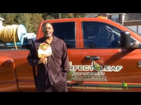 Lawn Treatment Program :Landscaping : Live Customer Testimonial : Perfect Leaf Management