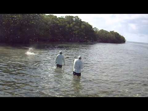 Mexico Fly Fishing For Tarpon Ascension Bay