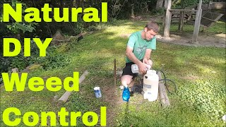 How to Make Homemade Weed Killer -  Show Results with and without Salt