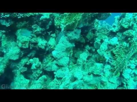April 2015 Red Sea Wildlife Compilation
