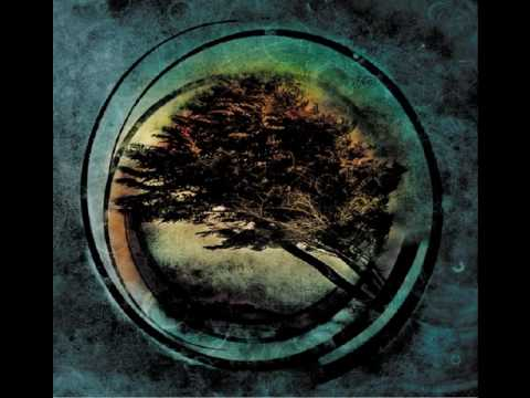 Tides from Nebula - Apricot