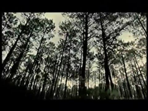 La Oreja de Van Gogh - Mariposa (Vídeo Oficial)
