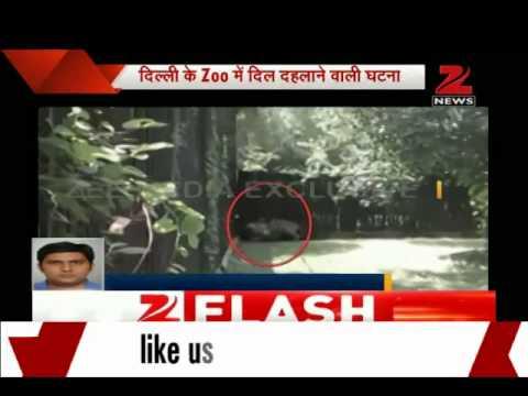 Exclusive: White tiger kills youth in Delhi Zoo
