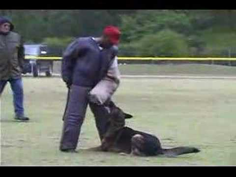 Schutzhund  USA North American FH and SchH Championship