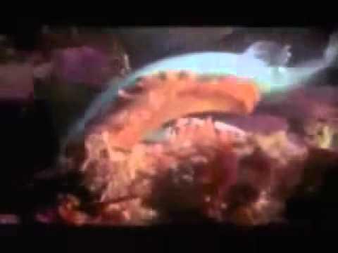 Octopus Eating Itself Octopus Eats Shark Mp4