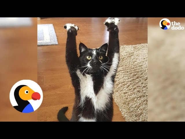 This Cat Can't Stop Putting Her Arms In The Air — And No One Knows Why
