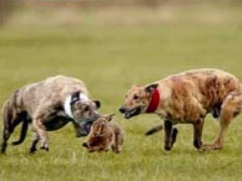 snatch, hare coursing with waterloo pictures