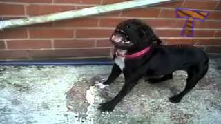 Sneezing and yawning cats and dogs   Funny and cute animal compilation