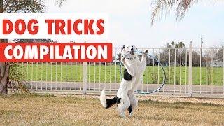 Amazing Dog Tricks Video Compilation 2017