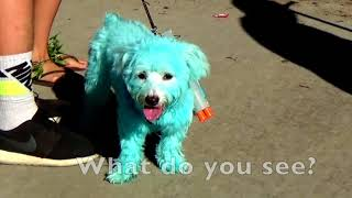 The Color BLUE SONG for Toddlers, Preschoolers  - Learn Simple Sentences