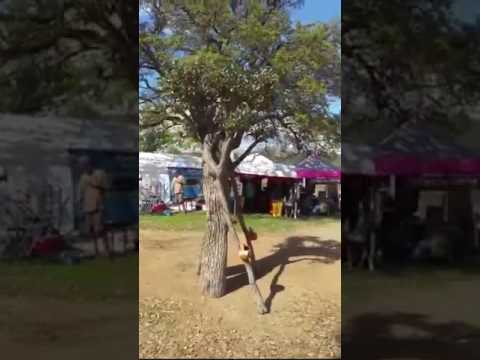 太驚人了,電影「魔戒」裡的樹人,竟然出現在現實生活中