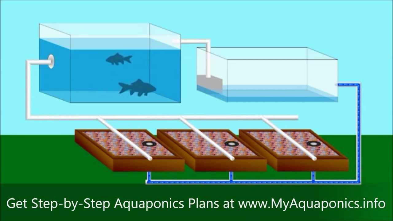Diy Aquaponics Do It Yourself Aquaponics Systems
