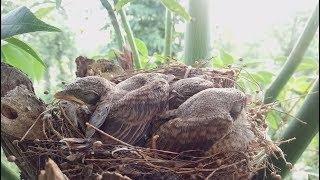 Thăm Lại Tổ Chim Gần Nhà Mình