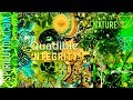 Youtube Thumbnail ★Nature Walk - EcoTherapy Healing Formula★ (Frequency Subliminal) Quadible Integrity