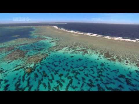 Tengeri állatok, szigetek