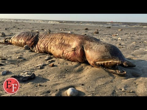 اعصار ايرما يكشف مخلوقات غامضة تعيش على الارض منذ الاف السنين (سبحان الله العظيم) thumbnail