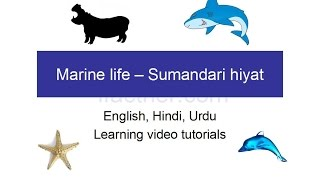 English learning lessons for beginners in Hindi : marine life in English