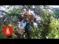 Download Video Rescuing Cats From Super Tall Trees MP3 3GP MP4 FLV WEBM MKV Full HD 720p 1080p bluray