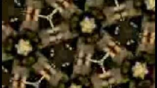 dj bora maya new video