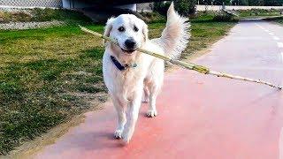 Dog just walks along the river: Funny Dog Bailey