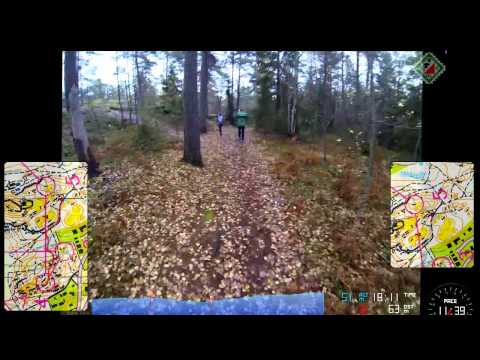 Orienteering - a view from the forest