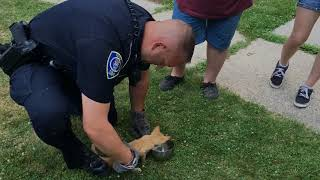 Police officers rescue kitten from car fender