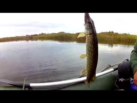 видео о ловле рыбы на кружки видео
