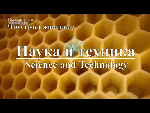 Наука и техника: Что строят животные | Science and Technology: What animals are building. Discovery