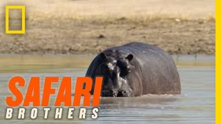 Lunch Date with a Hippo | Safari Brothers
