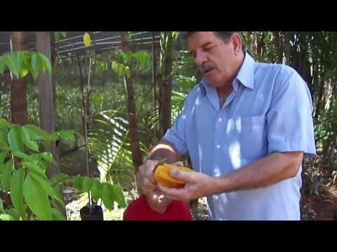 Carambola Mel fonte de vitaminas A e C apresentada pelo colecionador Farias