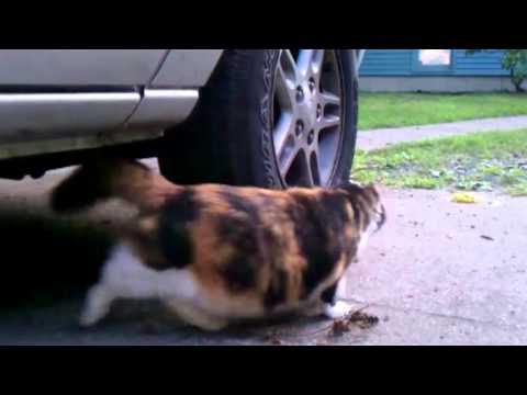 ネズミを追跡する猫の追いかけっこ