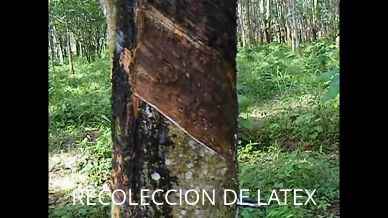 Colchones de espuma de latex natural en mexico youtube for Club natura colchones