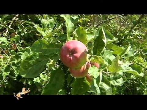 Travel to the apple country - part 1