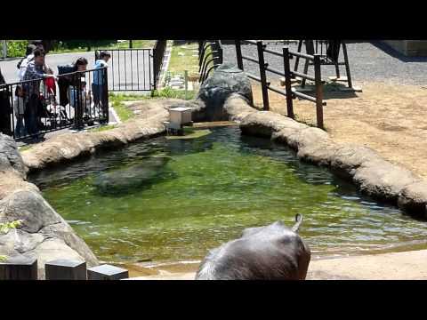 水牛 多摩動物公園 HD TZ7