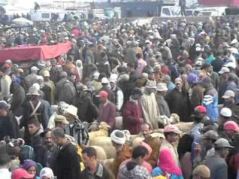 ثلاثاء سيدي بنور أكبر سوق بإفريقيا