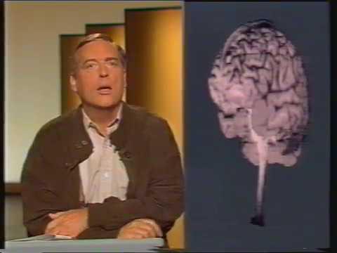 Bilder aus der Wissenschaft 1991