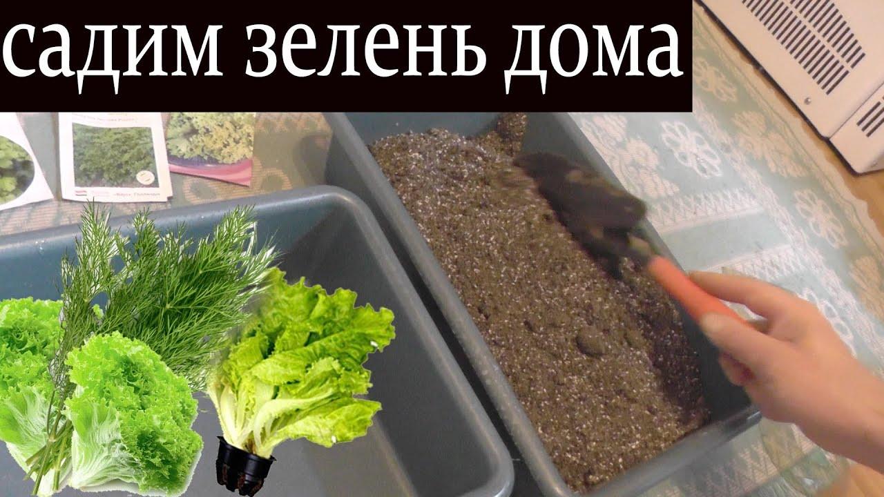 Как в домашних условиях вырастить зелень 868