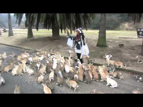 Зверское нападение кровожадных кроликов (18+)