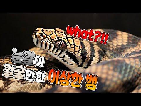 눈알이 얼굴만한 이상한뱀이 도착했네요