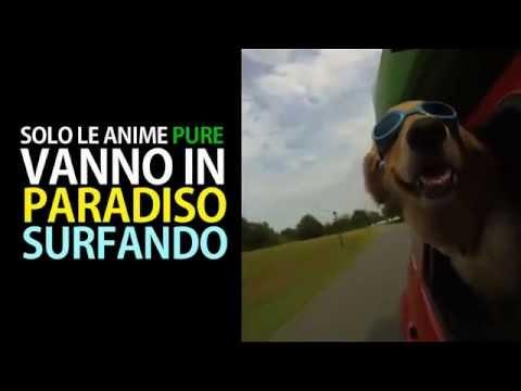 Contro l'abbandono dei cani – Estate 2011