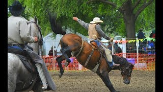 Bareback - Rodeo Gisborne New Zealand
