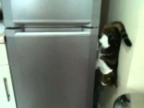 Gatos - El verdadero gato-araña
